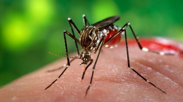 Zika infection still a sympathy toward pregnant ladies