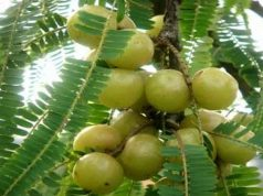 Health Benefits of Amalakir