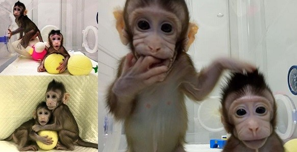 first time in the world China made cloned monkeys ক্লোন বানর