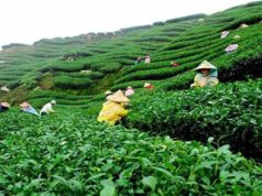Srimangal - Tea capital of Bangladesh