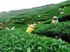 Srimangal - Tea capital of Bangladesh