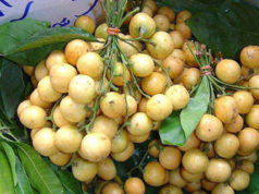 Nutritional value and benefits of seasonal fruits Lotkon