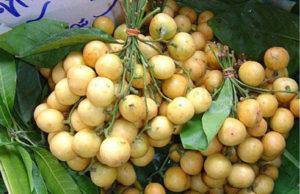 Nutritional value and benefits of seasonal fruits Lotkon